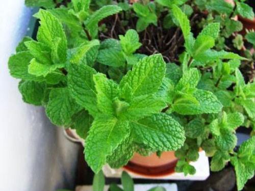 mundo de aromas para dentro da sua casa crie um jardim com plantas