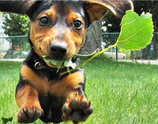 plantas toxicas jardim:Os cães e seu jardim – plantas frutíferas tóxicas – Giacomelli Blog
