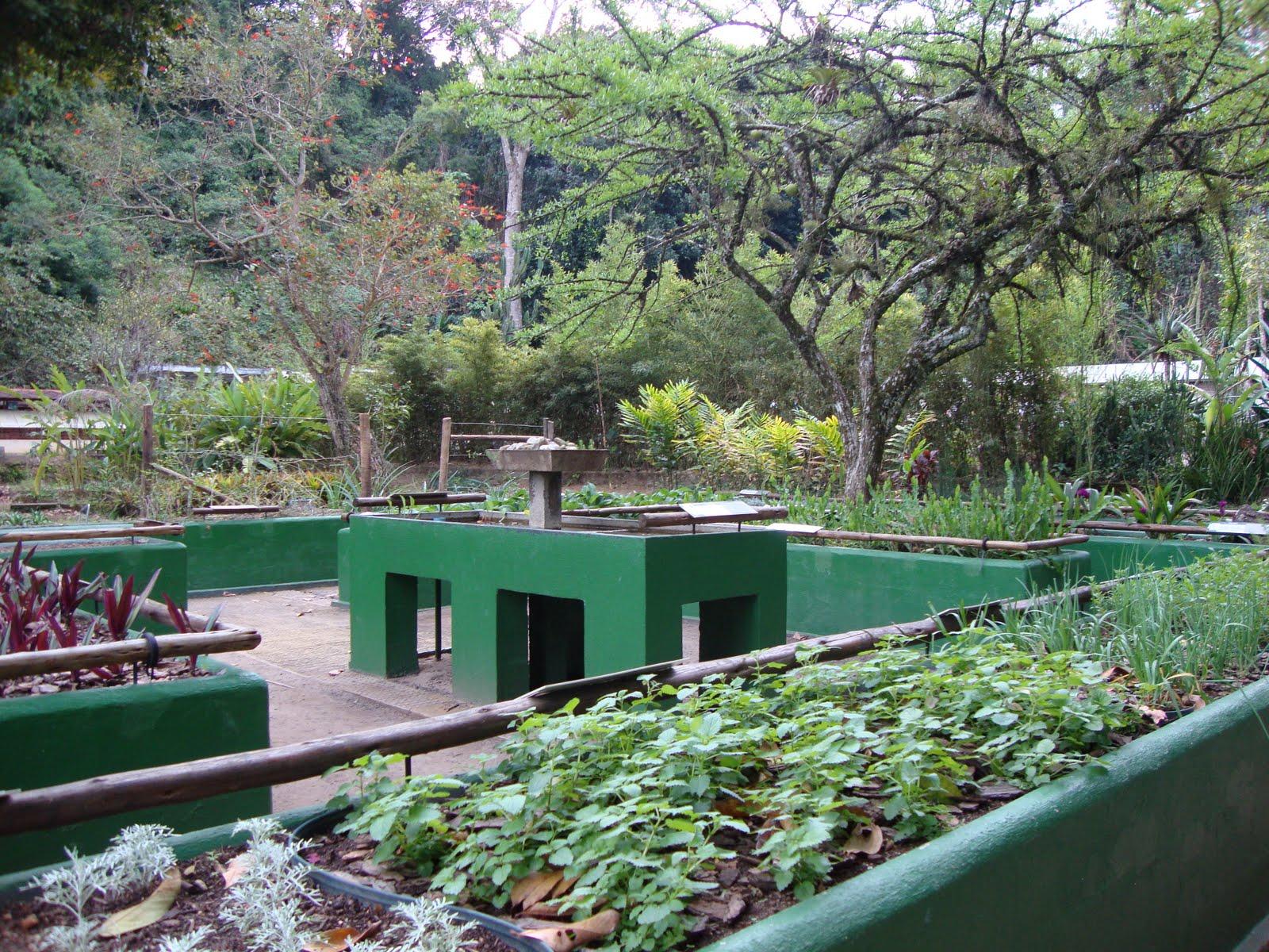 plantas jardim sensorial : plantas jardim sensorial:Jardim sensorial no Jardim Botânico do Rio